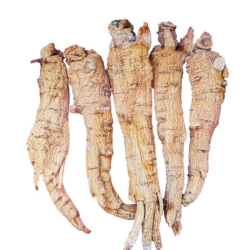 American ginseng (Extra Large)  227g/ $88.5